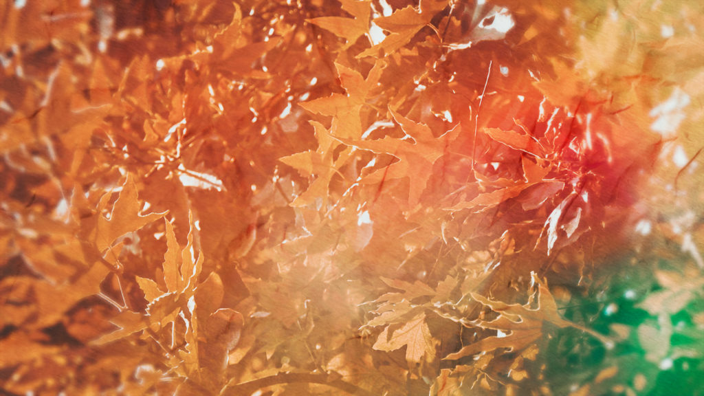 Fall Leaves Still (1080)